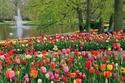 """صور أبرز وأجمل 15 موقعاً يجب أن تزورهم في بلد الزهور """"هولندا""""!"""