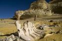 بالصور: عليك زيارة وادي الحيتان في مدينة الفيوم المصرية أقدم مدينة على وجه الأرض
