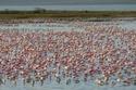 طيور الفلامنجو تُزين بحيرة ناكورو