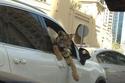 ثراء دبي الفاحش في 42 صورة