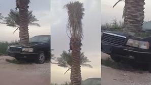 فيديو وصور.. نمو نخلة ضخمة داخل محرك سيارة في السعودية