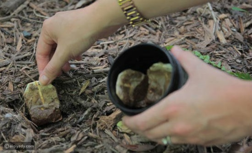 بالصور: تعرف على الاستخدامات الصحية المذهلة لأكياس الشاي المستعملة