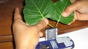 تقنية شحن الهواتف بالنباتات... أول ابتكارات إكسبو 2020