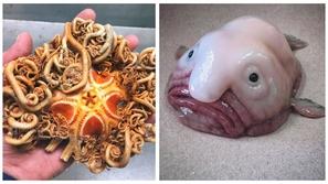 صور أغرب الأسماك والكائنات البحرية التي يمكن أن تراها.. بعضها مخيف حقا