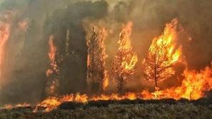 فيديو وصور: لقطات مرعبة من حرائق لبنان.. هكذا غطى الرماد كل شيء